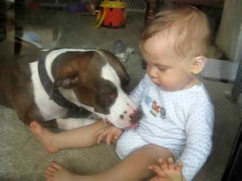 attacks baby vicious pit bull attacks baby