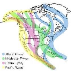 hummingbird lake maps learn the 12 ways birds migrate