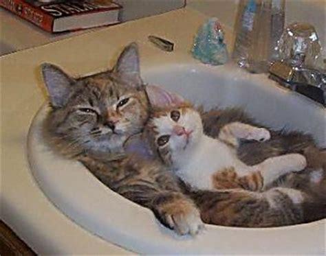 hunde waschbecken lustige katzen in