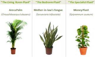 best indoor plants for oxygen three plants that give you better indoor air lifehacker australia