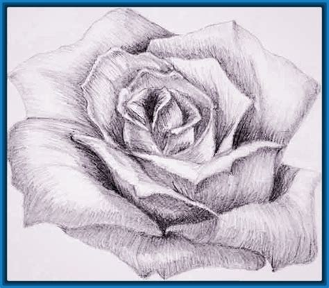imágenes de rosas bonitas para dibujar dibujos en lapiz de rosas pictures to pin on pinterest