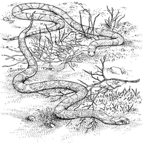 pin garter snake colouring pages page 2 on pinterest
