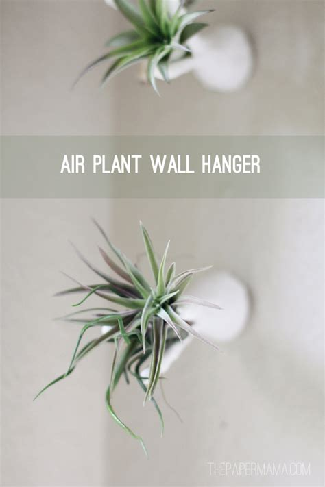 Hangers For Plants - air plant wall hanger