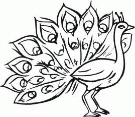 free printable peacock coloring pages for - Peacock Coloring Page