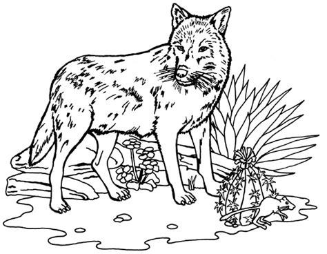 coloring books for wolves more advanced animal coloring pages for teenagers tweens boys zendoodle animals wolves practice for stress relief relaxation books wolf coloring pages free printable pictures coloring