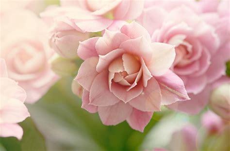 imagenes de flores whatsapp fotos de flores para perfil de whatsapp
