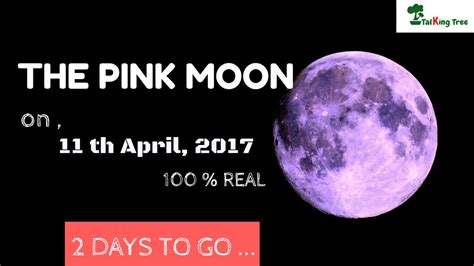 pink moon april 2017 the pink moon 11th april 2017 don t miss this time youtube