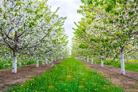 cherry tree farm cherry republic opens in quot bavaria quot up in cherry republic