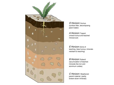 soil horizons diagram apes deriemaker
