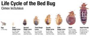 how to get rid of bed bugs at home how to get rid of bed bugs innovative pest management