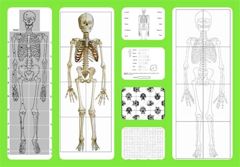 printable skeleton puzzle free printable life sized child and adult skeletons skull