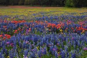 Florists In Tx Tx Wildflowers 4 24 14