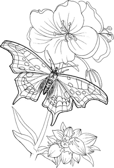 free printable coloring pages adults only az coloring pages
