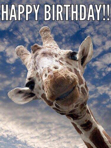 Giraffe Birthday Meme - giraffe birthday memes greetings pinterest happy