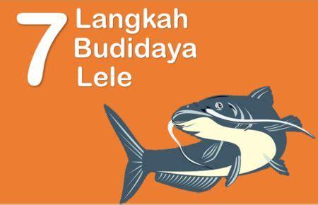 Bibit Lele Terbaru 7 langkah budidaya ikan lele pembesaran lengkap dan urut