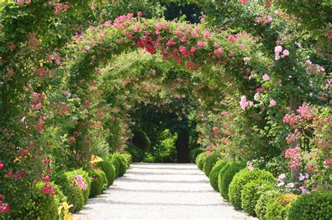picture of flowers in a garden deserves a garden of flowers this week the balancing act