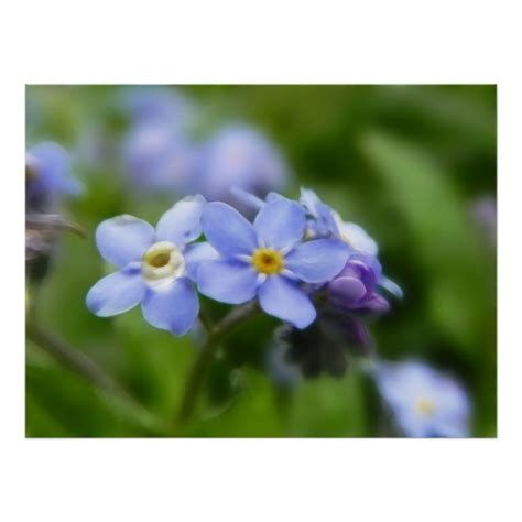 printable forget me not flowers delicate forget me not flowers print zazzle