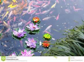 Koi Lotus Koi Pond Stock Photo Image 52210802