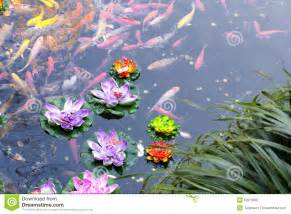 swimming in a small pond with plastic lotus flowers floating on top
