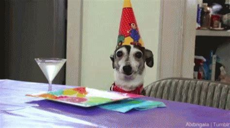 happy birthday puppy gif dogs happy birthday gif dogs happybirthday partyhat discover gifs