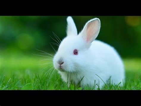 imagenes de un animal como cuidar a tu conejo youtube