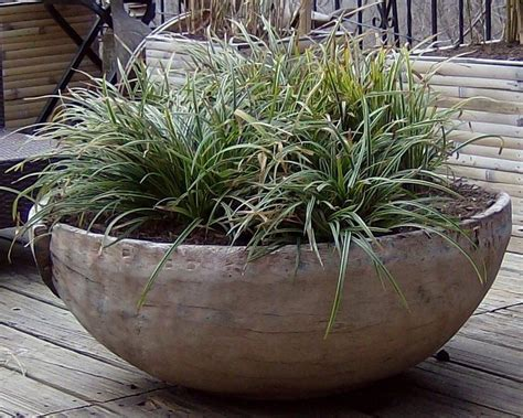 Grasses In Planters by Ornamental Grasses In Wooden Planter Jpg From Sustain