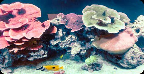 barnyard bbq hurricane wv aquarium specialty pets nitro wv