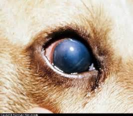 Fungal Diseases In Plants List - hepatitis infectious canine
