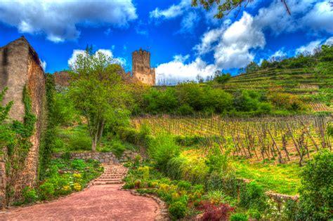 Sale Velly Anggur gambar pemandangan pohon padang rumput bukit bunga