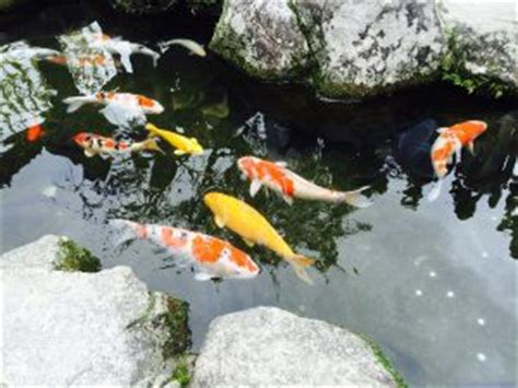 profitable backyard farming turn your backyard into a profitable fish farming business worldwide aquaculture