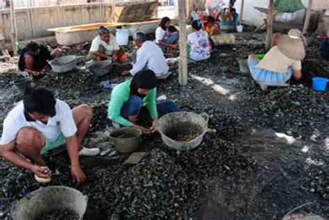 Kerang Naik Harga harga kerang di cilincing malah naik karena limbah