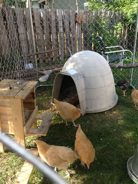 dog house craigslist need coop backyard chickens