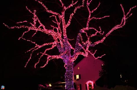 pink outdoor christmas lights pictures photos and images