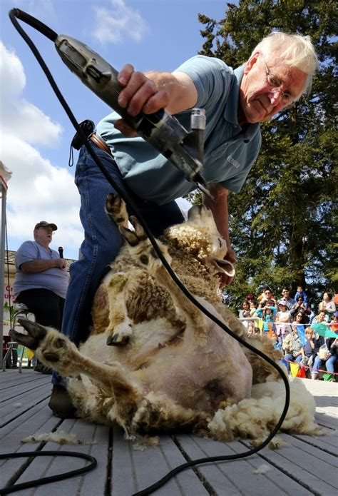 astrology et al bookstore seattle wa book store in it s sheep shearing time at kelsey creek farm park in