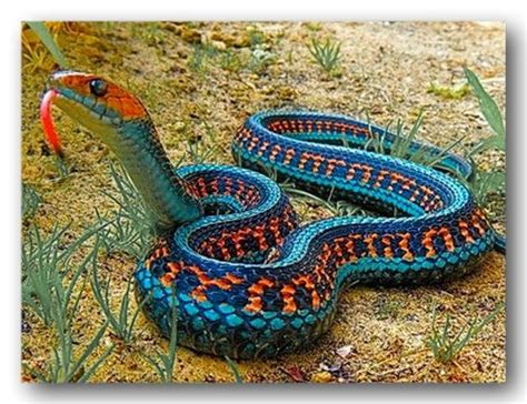 Garden Snake Canada 107 Best Images About Reptiles In Canada On