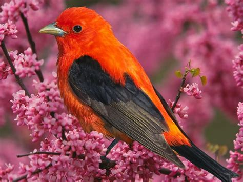most beautiful colors life around us beautiful colorful birds