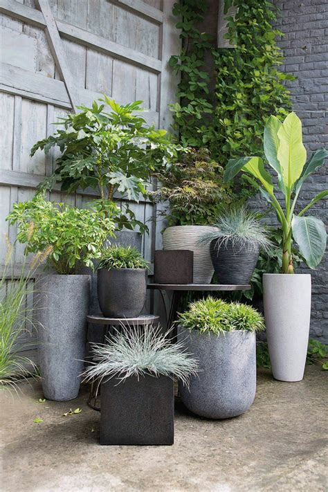 piante da fiore in vaso piante da fiore in vaso gallery of sono molte le piante