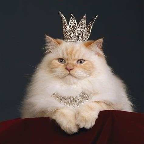 fancy cat (@catfancy) | twitter