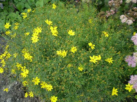 flowering perennials for clay soil hip chick digs