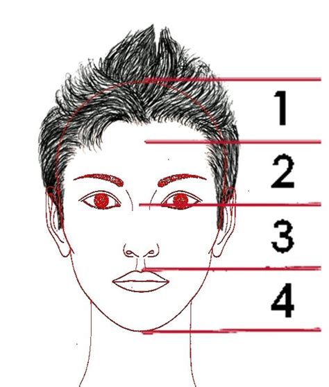 libro el rostro de un 4 3 la proporci 243 n en el rostro