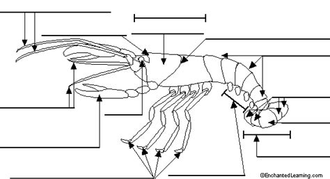 Crayfish Dissection Worksheet by Sigourneyjhscience Crayfish Dissection Questions