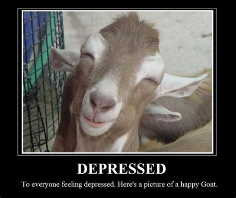 Billy Goat Meme - funny goat sayings and quotes quotesgram