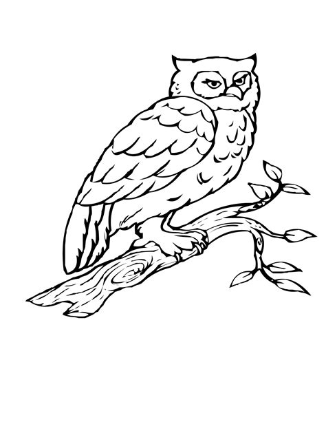 coloring pages of birds in trees owl on a tree branch colouring pages