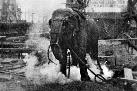 Top Sy Electrocuting An Elephant