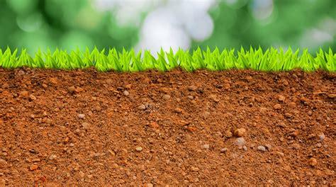 imagenes 3d en el suelo 191 c 243 mo volver productivos suelos salinos y s 243 dicos