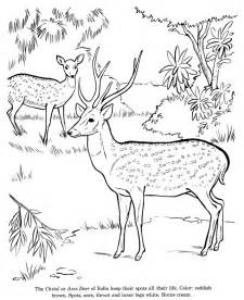 animal drawings coloring pages chital animal identification drawing coloring pages