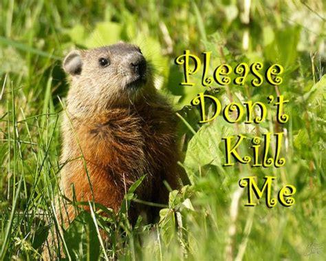 groundhog day killer ground hog advice thegunrack