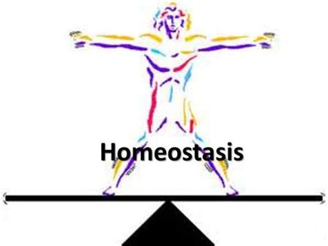 homeostasis and feedback in the body ppt video online