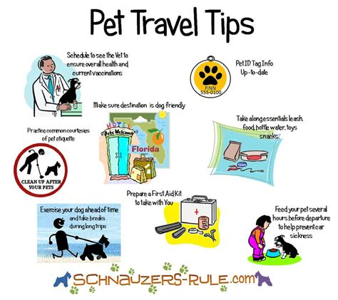 puppy basics car travel tips for safety