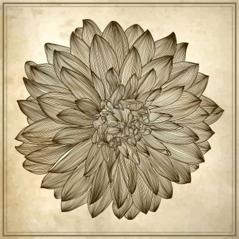 dahlia tattoo designs inspiration dahlia tattoo ideas